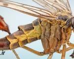 فضاییترین حشرات دنیا +عکس