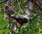 بوآی قاتل میمون ها +عکس