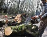 نگرانی از تخریب جنگل های گیلان با ساخت سد شفارود