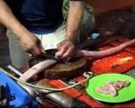 مار هنگام پخته شدن آشپز را کشت + عکس