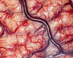 جایزه 100 هزار دلاری برای بهترین راهکار بازیابی مغز پس از مرگ