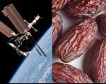 محافظت از استخوان فضانوردان با رژیم آلو خشک