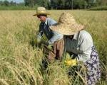 گرم شدن زمین میزان تولید محصول...