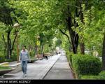 """""""چهار باغ"""" پیادهراه میشود/ خداحافظی وسائل نقلیه با خیابان تاریخی اصفهان"""