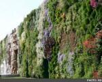 ركورد بزرگترین باغچه عمودی جهان