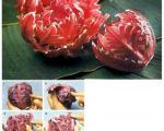 یک گل وحشی زیبا با کلم قرمز