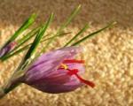 این گیاه ایرانی محافظ بینایی است