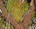 تصاویر فوق العاده زیبا از دنیای پرندگان (6)