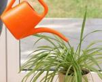 نکاتی که بهتر است درباره آبیاری گیاهان آپارتمانی بدانید