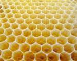 مدرک مهندسی «زنبور عسل» هم جعلی است!