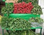 سبزیهایی كه طعم سرطان دارند