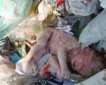 نجات نوزاد سه روزه رها شده در کیسه پلاستیک در كاشمر