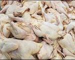 مرغ در برخی استانها کیلویی 8000 تومان شد!