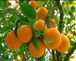 7 میوه برای محکم کردن پوست