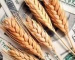 8سال پس از خودکفایی گندم در دولت اصلاحات/هر 40 دقیقه یک کامیون گندم وارد کشور می شود