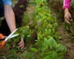 گیاه ضد نفخ