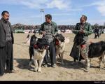 عکس: مسابقه بهترین سگ نگهبان در اصفهان
