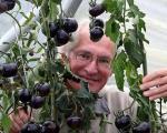 گوجه فرنگی سیاه! +عکس