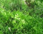 سبزیهای جنوب تهران به علت آبیاری با فاضلاب انسانی سرشار از املاح و ویتامینها هستند!
