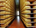 بانکی مخصوص عاشقان پنیر +عکس