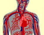 توصیههای غذایی برای بهبود گردش خون