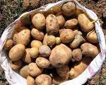 رییس انجمن سیبزمینی كشور:كند شدن روند صادرات سیب زمینی