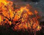 جنگلهای ایران در آتش میسوزند:شمال ، شمال شرق و غرب