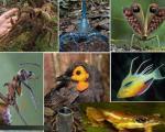 دانشمندان جدیدترین آلبوم «گونههای حیوانی دنیای علم» را رونمایی كردند