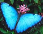 ساخت اسکناس غیرقابل جعل با الهام از بال پروانه