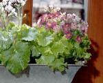 گیاهان خانگی معطر