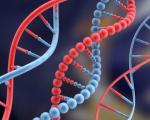 روش جدید محققان برای افزایش طول عمر