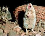 از وزغ سبیلدار تا موش عقربخوار: باحالترین حیوانات سال 2013