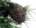 ۳۰ هزار زنبور یک خانه را محاصره کردند