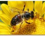 زنبورها جهان را سریعتر از انسان می بینند