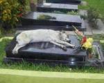 وفادار ترین سگ دنیا +عکس