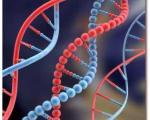 كشف شباهت ژنوم قورباغه و انسان