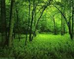 زندگی تارزان ۱۶ ساله در جنگل