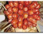 سنجد؛ مفید برای درمان آرتروز