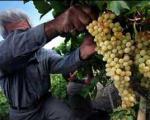 مراسم دوشاب پزان در آذربایجان