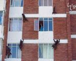 تصاویر: حمله میمون ها و غارت یک شهر