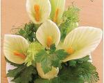 سفره خوش منظره با سبد گل کرفس و هویج