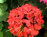 تا آغاز بهار، گلهای آپارتمانتان را پالتوپیچ کنید!