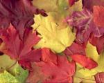 چرا برگ درختان در پاییز زرد و قرمز میشود؟!
