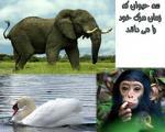 ۳ حیوانی که زمان مرگ شان را می دانند!
