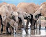 کشف حس همکاری در میان فیلها