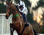 ورزش پر هیجان اسب سواری