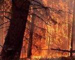 آتش سوزی سفیدکوه خاموش شد