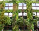 سبزترین دیوارهای جهان +عکس