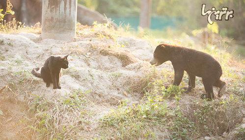 دوستی عجیب گربه و توله خرس