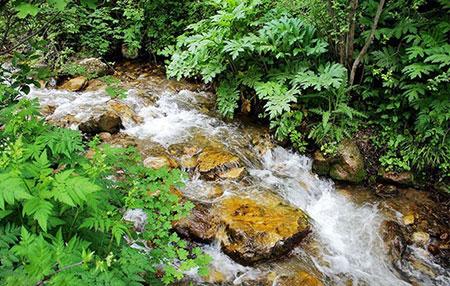 عکس های جنگل ارسباران در آذربایجان,آذربایجان شرقی